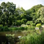Mill pond summer